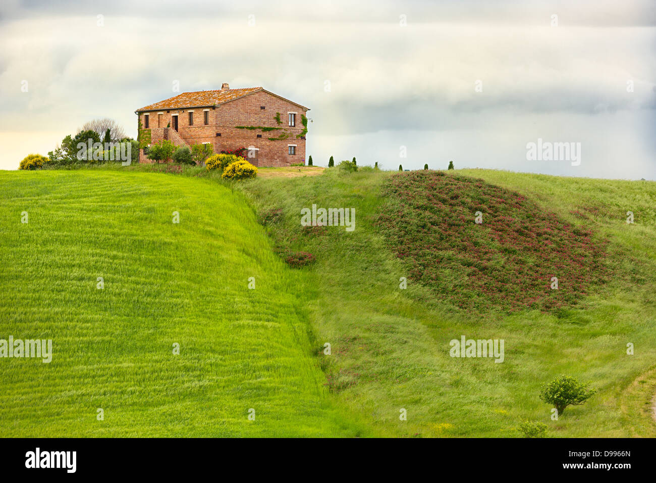 Tuscany farmhouse with fields and flowers, Val d'Orcia, Italy Stock Photo