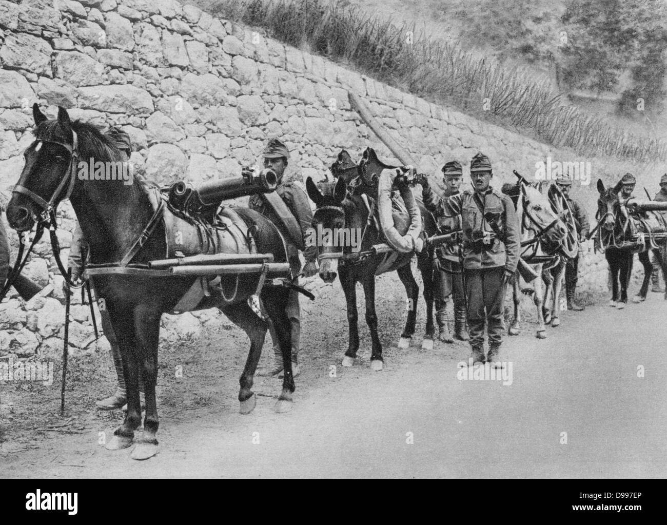World War I 1914-1918: Austro-Hungarian soldiers with pack horses carrying guns.   First Battle of Isonzo, 23 June - Stock Image