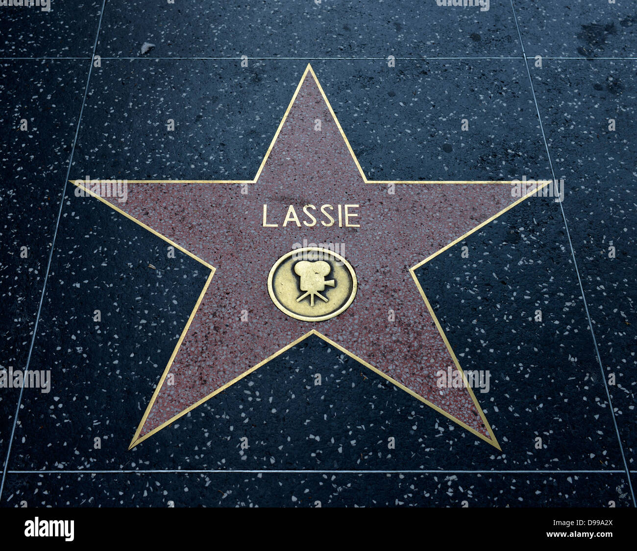 Terrazzo star for artists Lassie, category Film, Drumming of Fame, Hollywood boulevard, Hollywood, Los Angeles, - Stock Image
