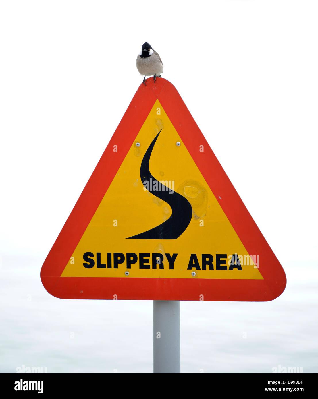 Sparrow on sign slide danger, Slippery area - Stock Image