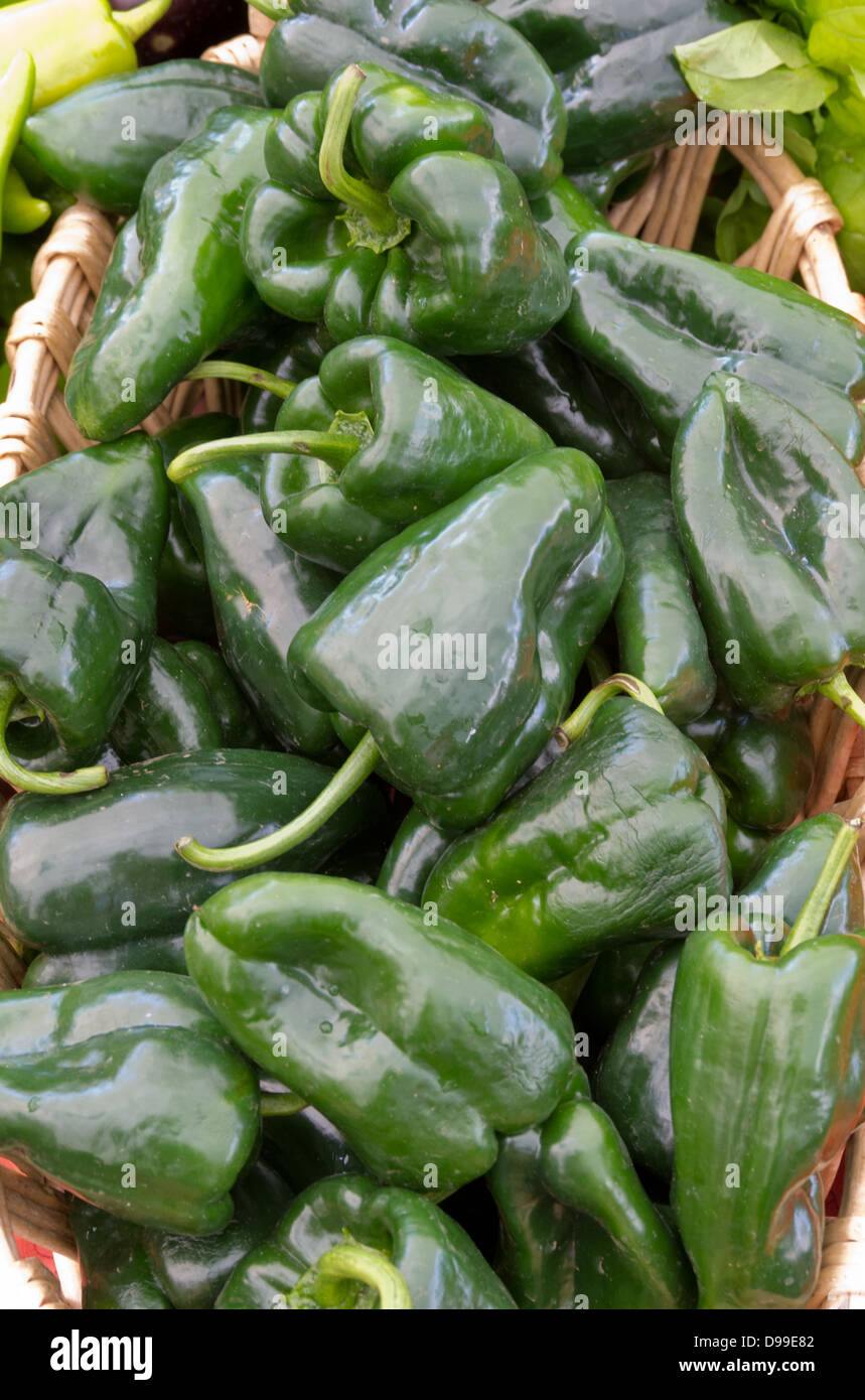 Freshly picked poblano peppers on display at the farmers market Stock Photo