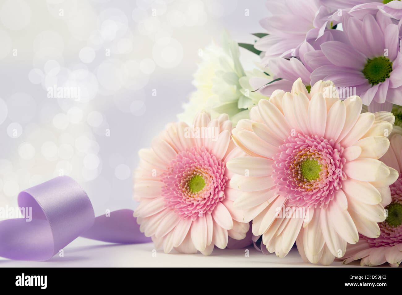Pink gerbera flowers with mauve ribbon and soft diffused background. - Stock Image