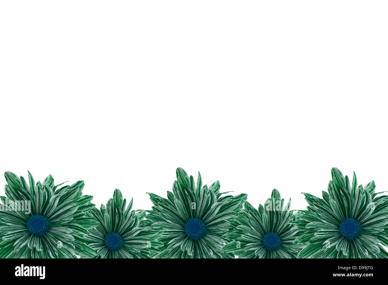 Green chrysanthemum border with a white background. - Stock Image