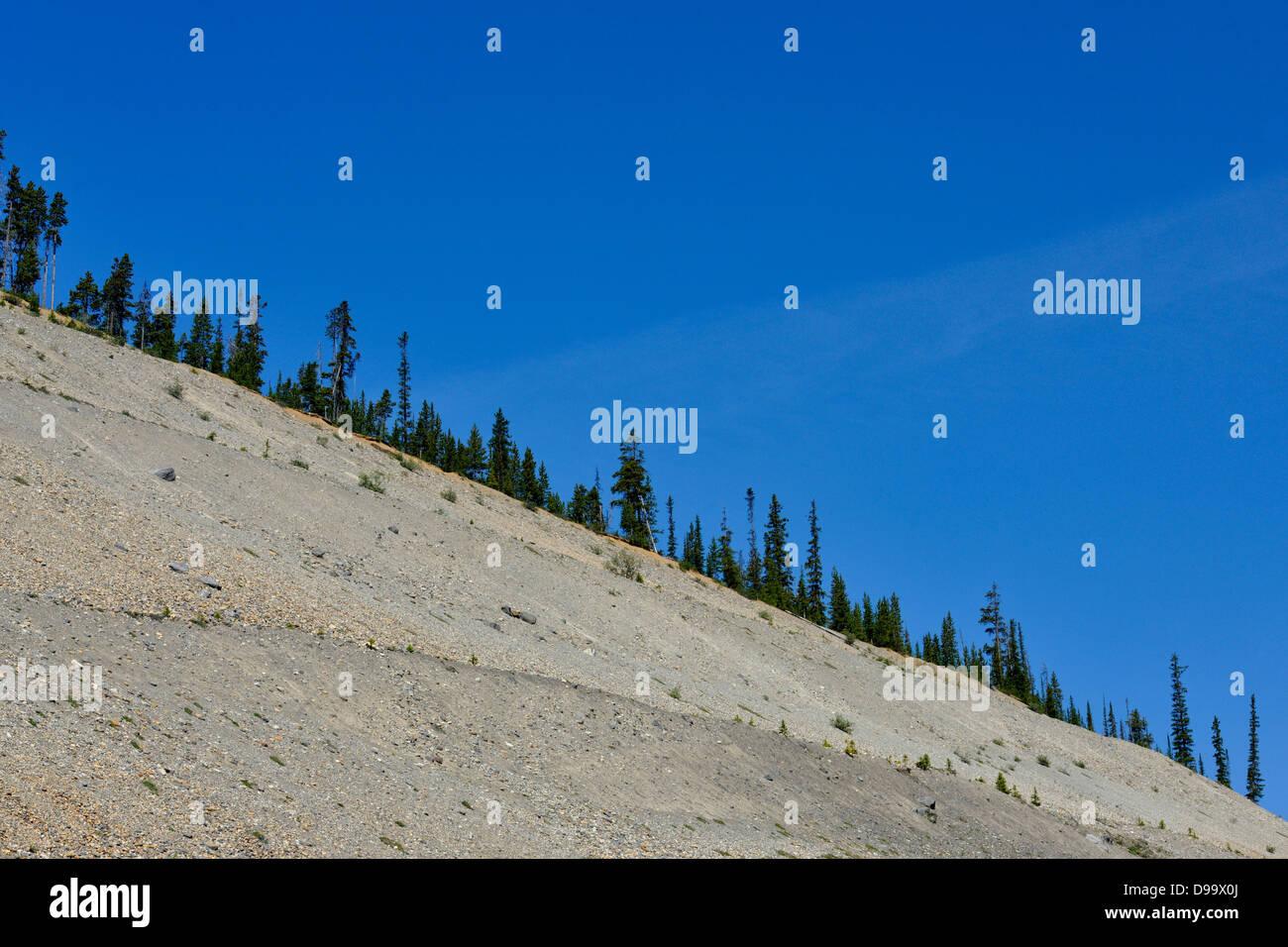 Subalpine firs on a scree slope ridge Banff National Park Alberta Canada - Stock Image