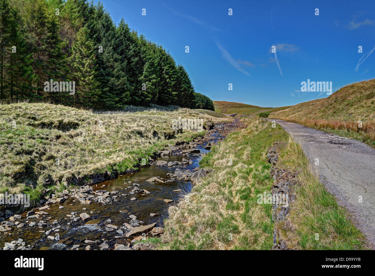 Stream running alongside a tarmac path and conifer forest - Stock Image
