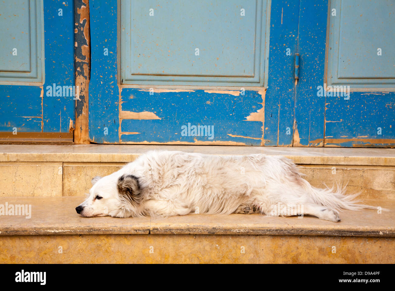 Small white dog in old town Chania on Mediterranean island of Crete - Stock Image