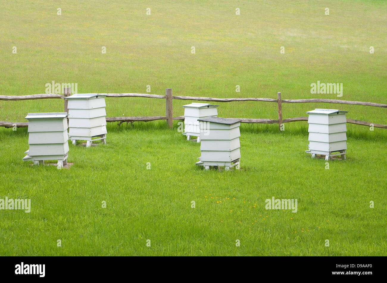 Hives in green meadow. West Sussex, UK. - Stock Image
