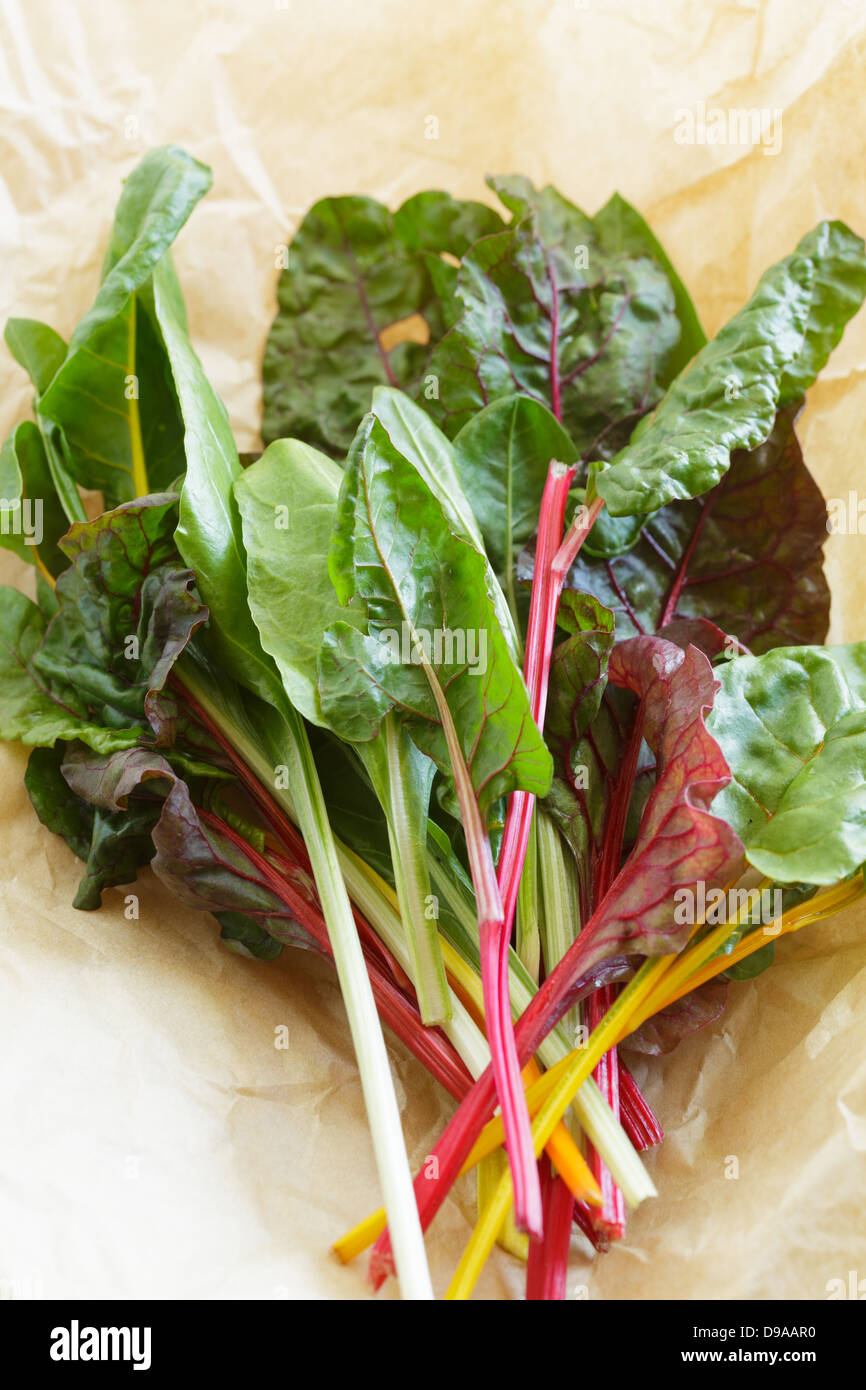 Rainbow chard leaves just picked - Stock Image
