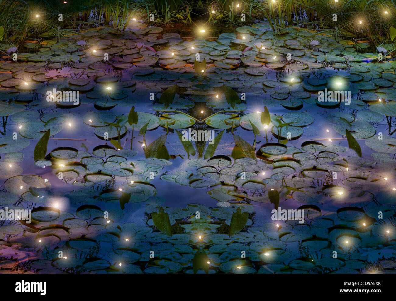 fireflies and water lily pond depiction Stock Photo