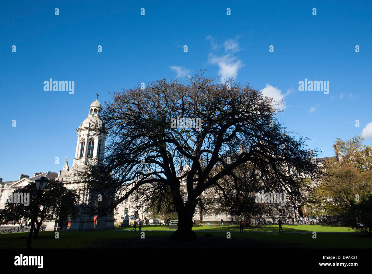 A graceful tree silhouettes the building inside the grounds of Trinity College Dublin in the Republic Of Ireland - Stock Image