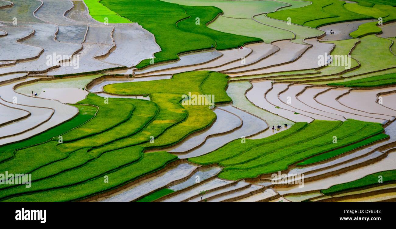 Terraced rice field in Vietnam in water season - Stock Image