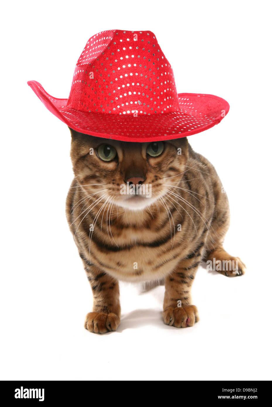 Kittens Cowboy Hat Stock Photos & Kittens Cowboy Hat Stock Images