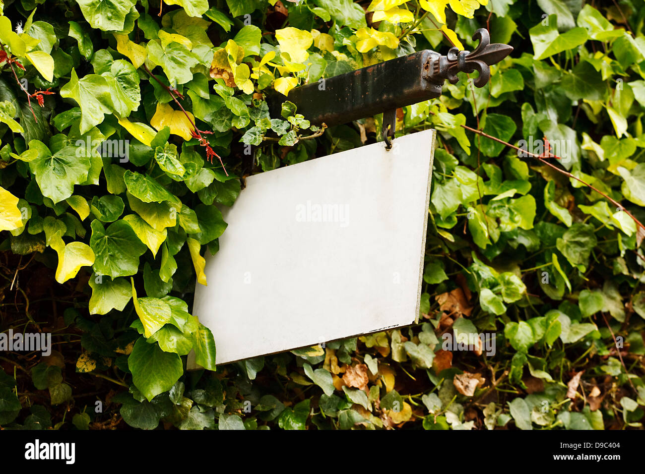 Traditional wrought Iron blank sign surrounded by an ivy creeper suitable for cusomising to any rural tourism industry - Stock Image