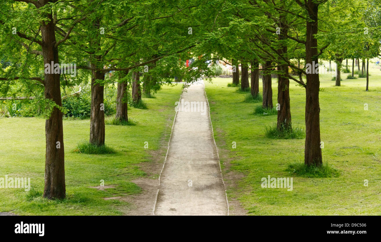 tree lined path or avenue disappearing into the distance in an urban recreational area or park - Stock Image