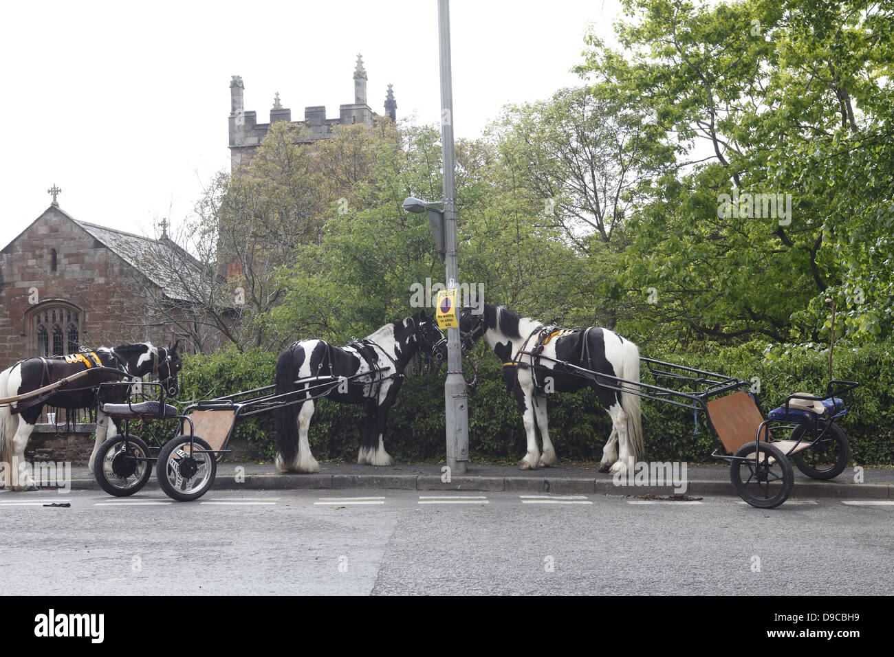 Gypsy horses with their carriages parked on the pavement with a 'No parking' sign during Appleby Horse Fair, - Stock Image