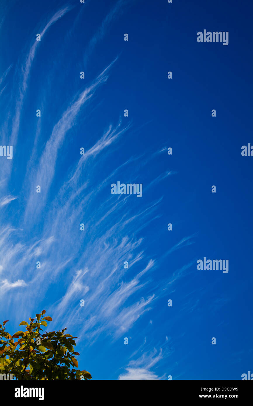 Spreading tendrils of wispy clouds in a clear blue sky - Stock Image