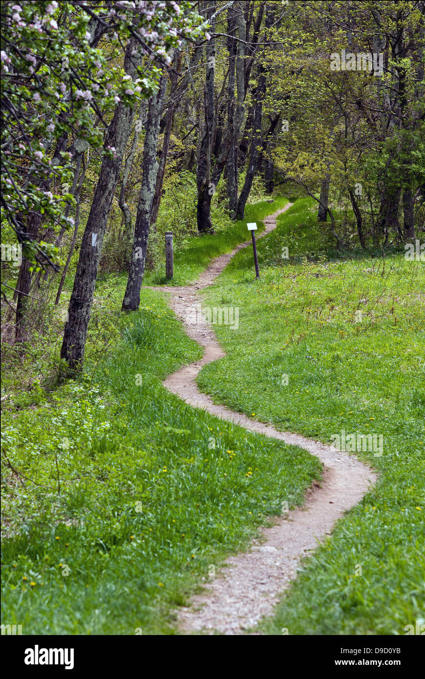 The Appalachian Trail wends its way through Shenandoah National Park in Virginia in early Spring as white-flowered - Stock Image