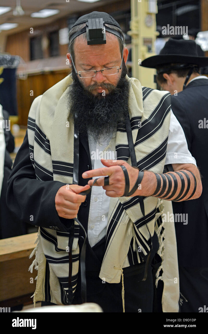 Religious Jewish man putting on phylacteries - teffilin - at morning services at Lubavitch headquarters in Brooklyn, - Stock Image