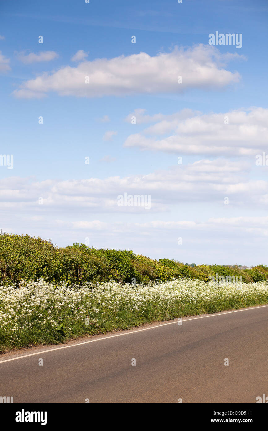 Hedgerows along an empty - Stock Image