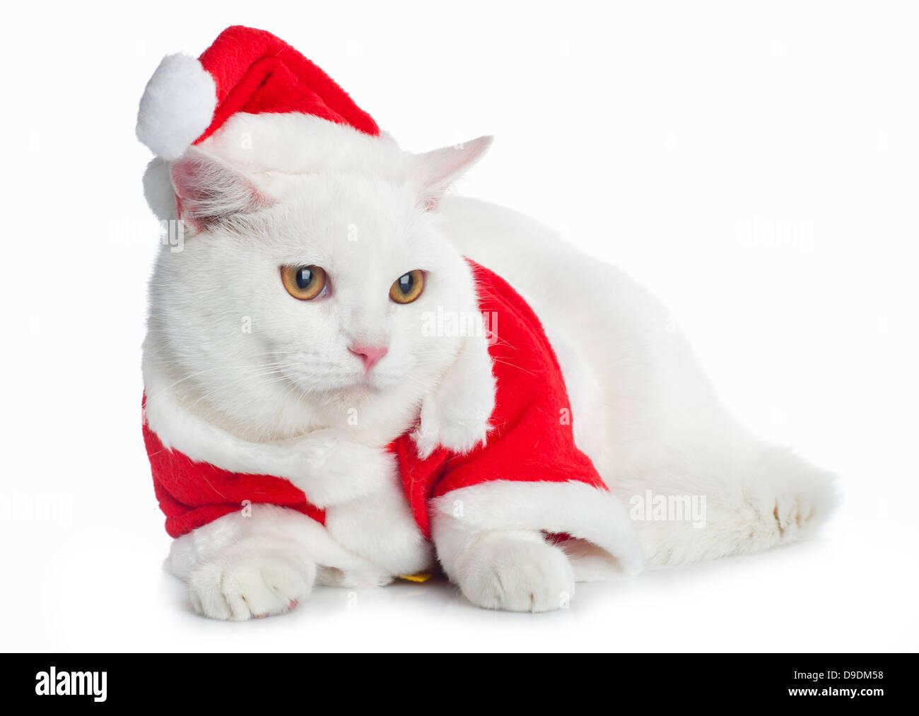 White Cat with yellow eyes on white background - Stock Image