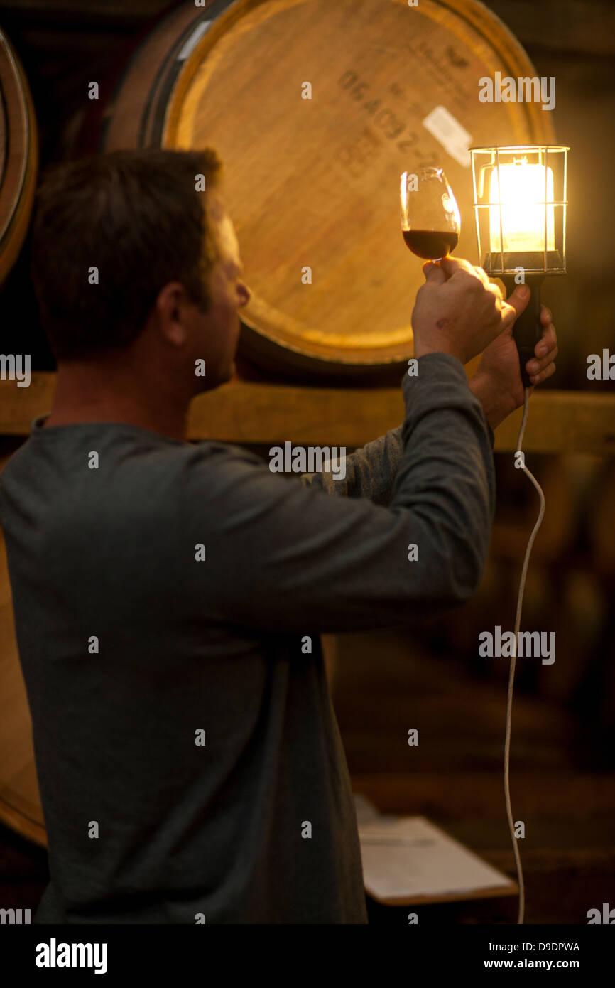 Checking wine aging in barrels - Stock Image