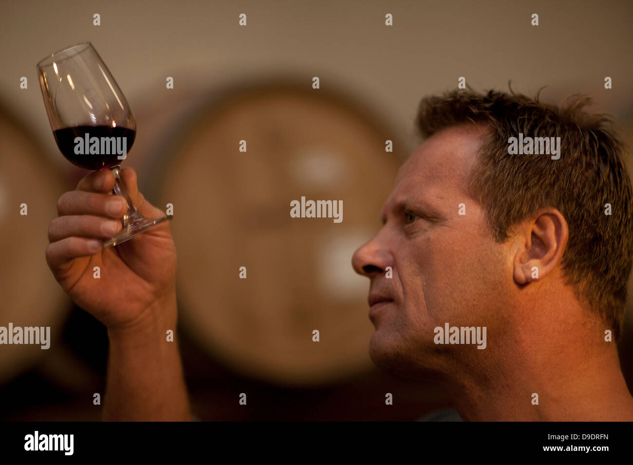 Man checking the color of red wine - Stock Image