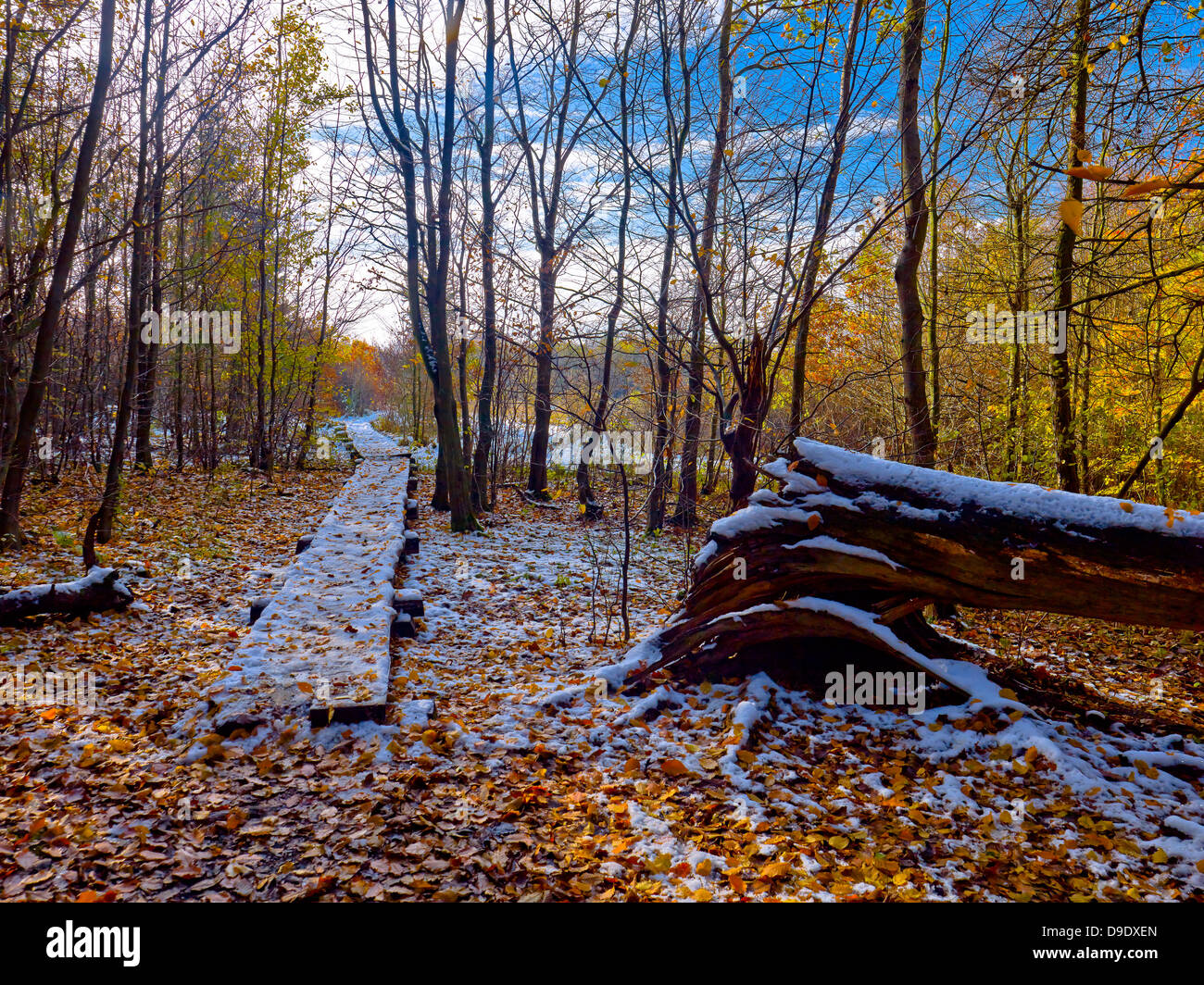 Exit from the Gotterschen undergrowth in Hainich National Park, Thuringia, Germany Stock Photo