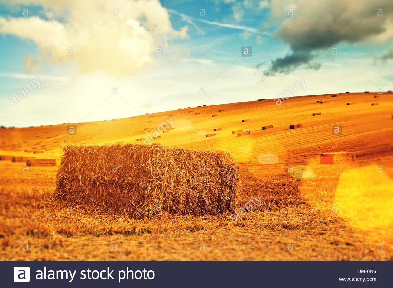 sunny hay bales - Stock Image