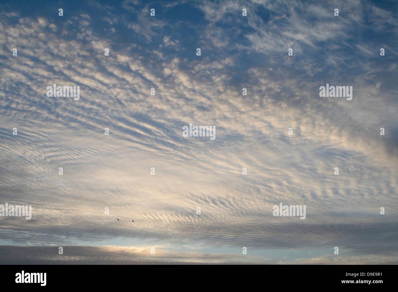 Sky Holland Stock Photo