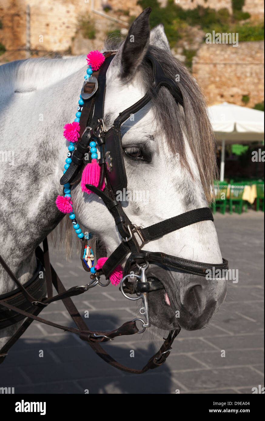 Grey horse in old town Chania - Stock Image