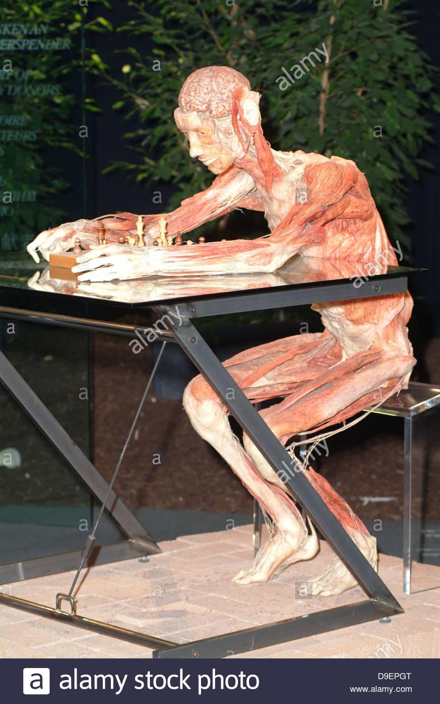 Anatomical Anatomy Autopsy Bodies Body Stock Photos & Anatomical ...