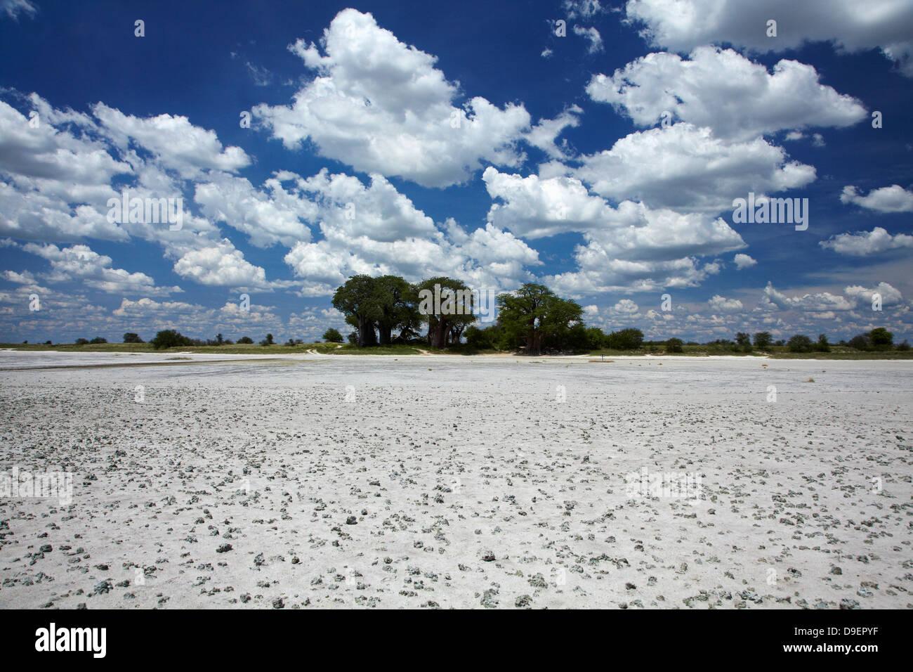 Kudiakam Pan and Baines' Baobabs, Nxai Pan National Park, Botswana, Africa - Stock Image