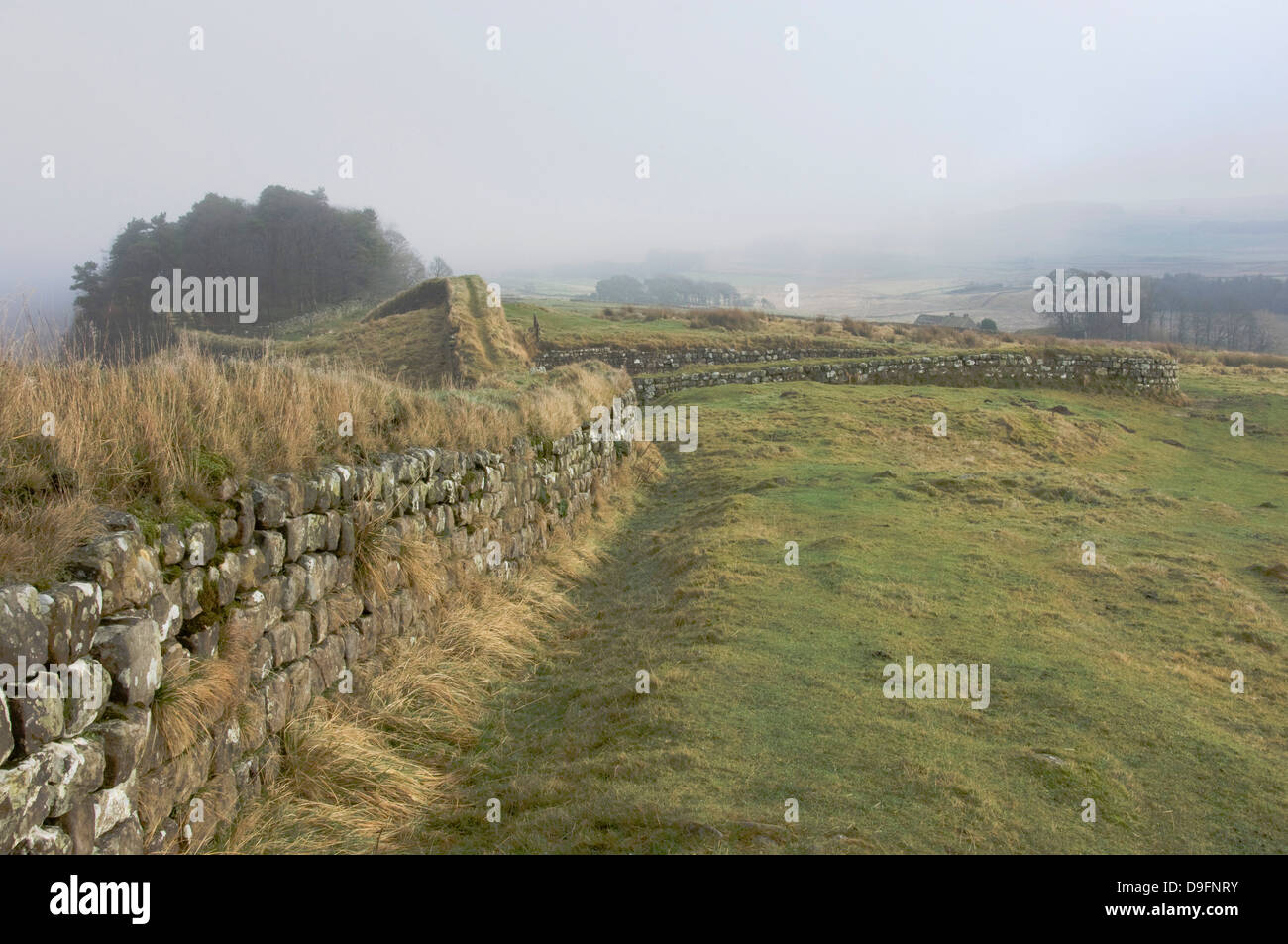 View from Milecastle 37 to Housesteads Wood, Hadrians Wall, UNESCO Site, Northumberland National Park, England, - Stock Image