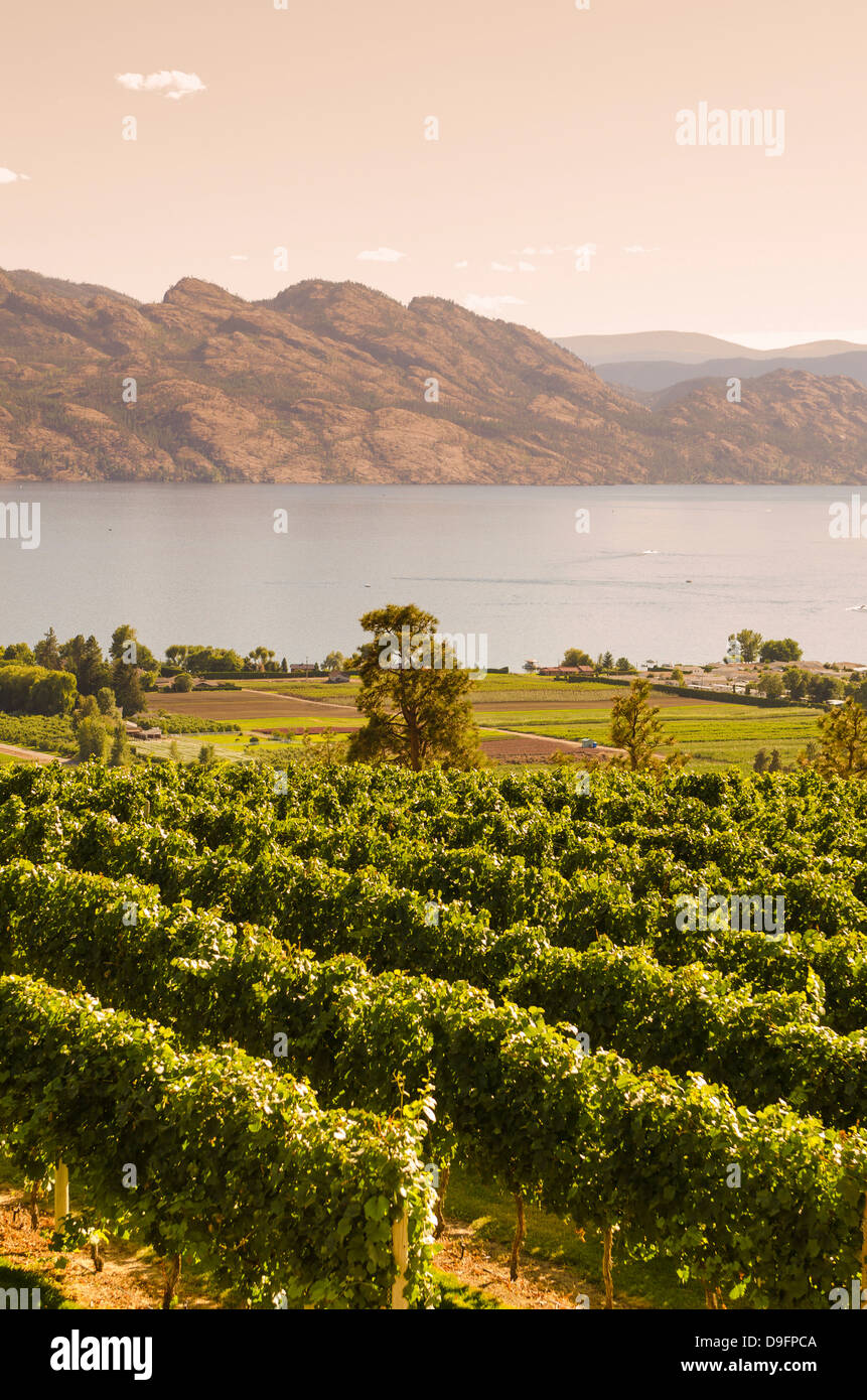 Grape vines and Okanagan Lake at Mission Hill Family Estate, Kelowna, British Columbia, Canada - Stock Image
