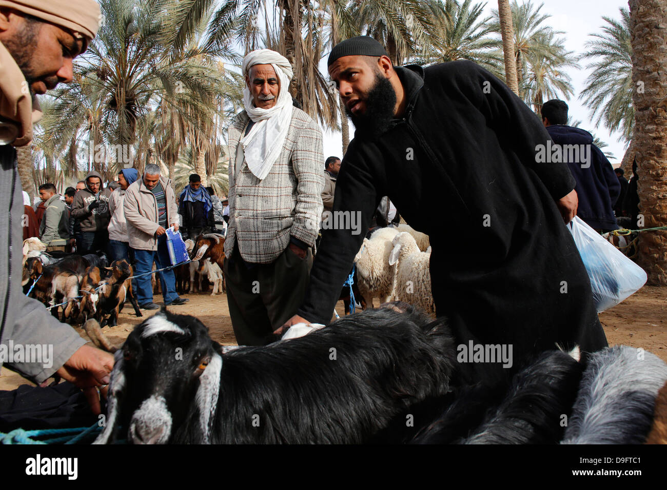 Weekly cattle market in Douz, southern Tunisia, Africa - Stock Image