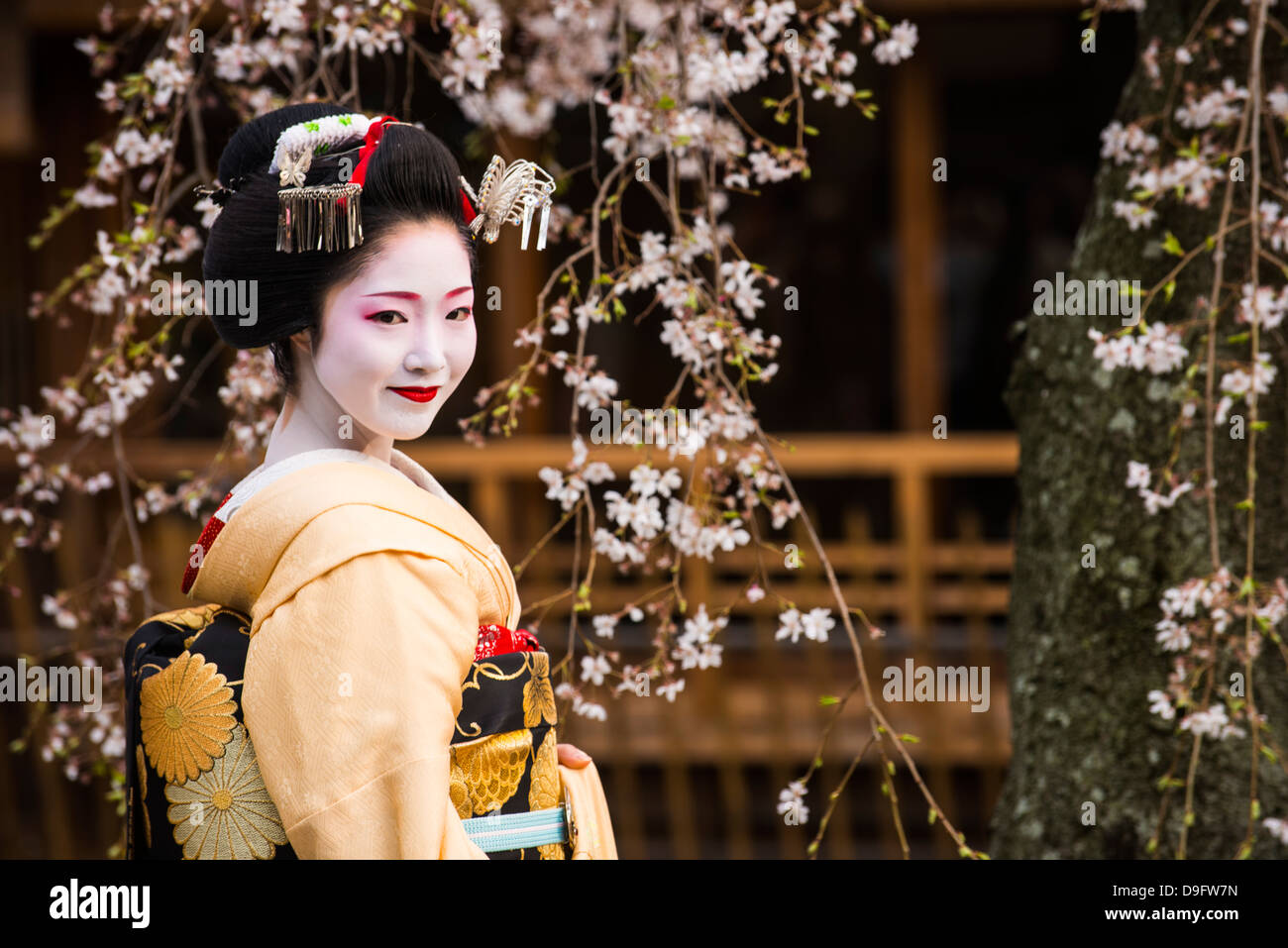 Real Geisha posing before a cherry blossom tree in the Geisha quarter of Gion in Kyoto, Japan - Stock Image