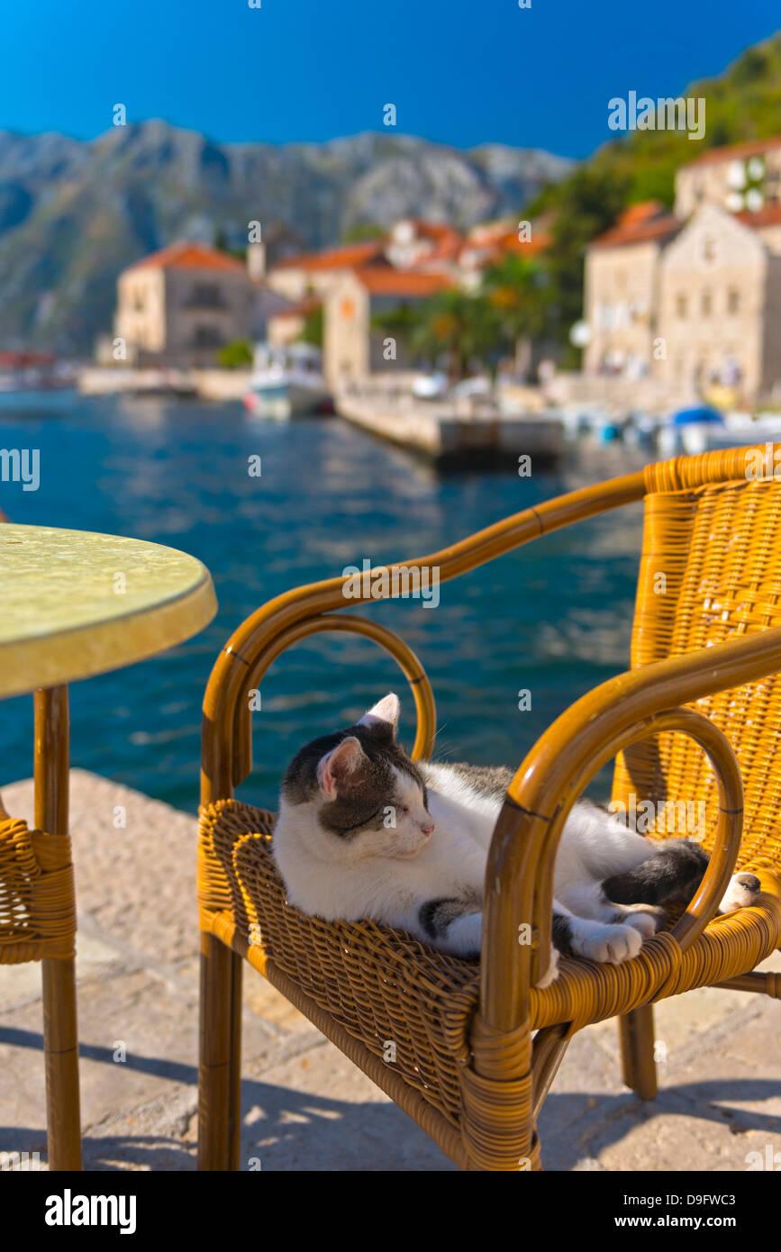 Waterside cafe and cat, Perast, Bay of Kotor, UNESCO World Heritage Site, Montenegro - Stock Image