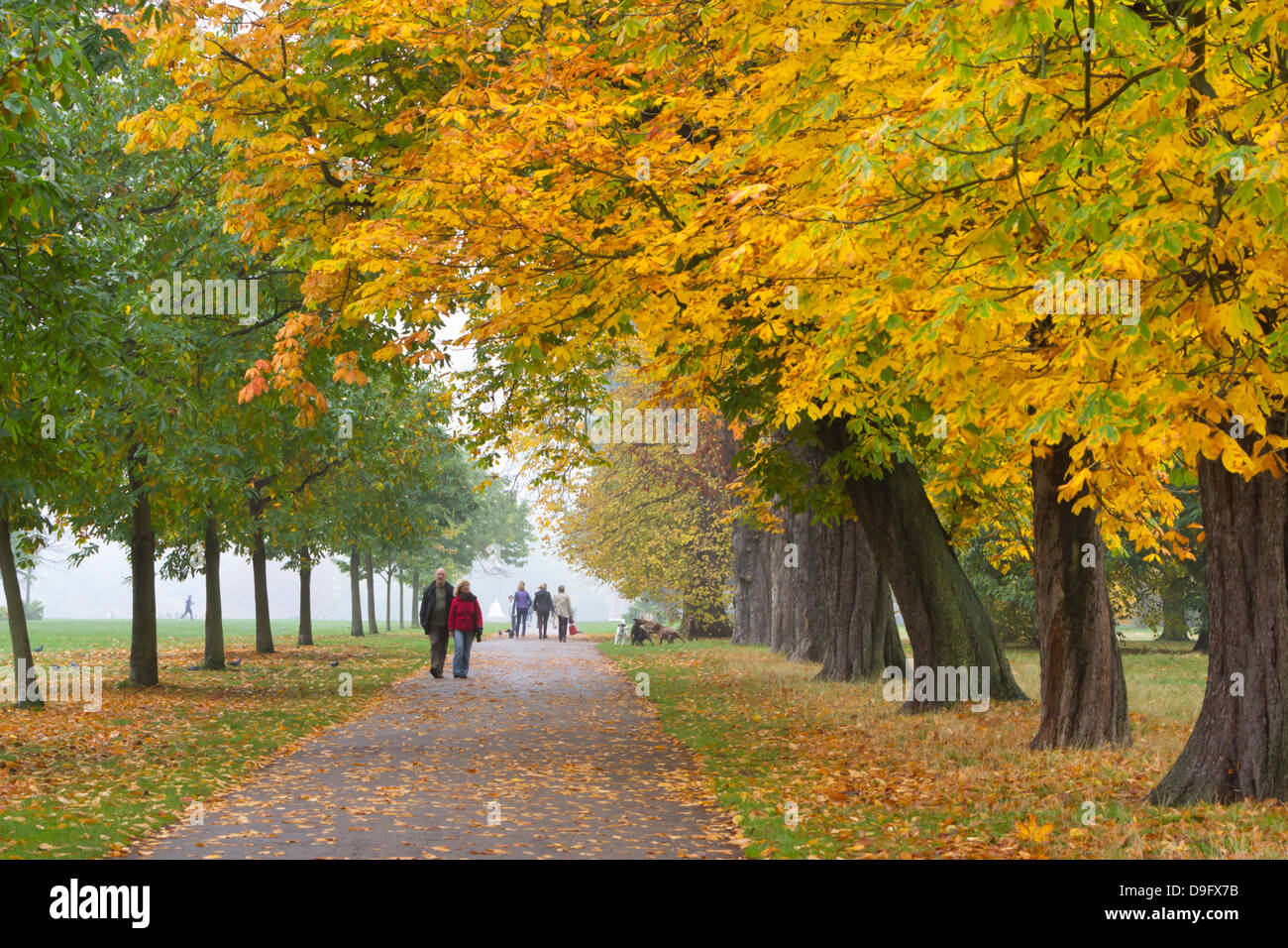 Autumnal trees, Hyde Park, London, England, UK - Stock Image