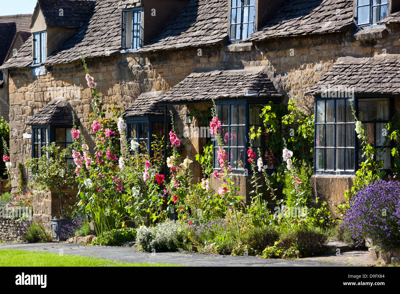 Hollyhocks and Cotswold cottage, Broadway, Worcestershire, Cotswolds, England, UK - Stock Image