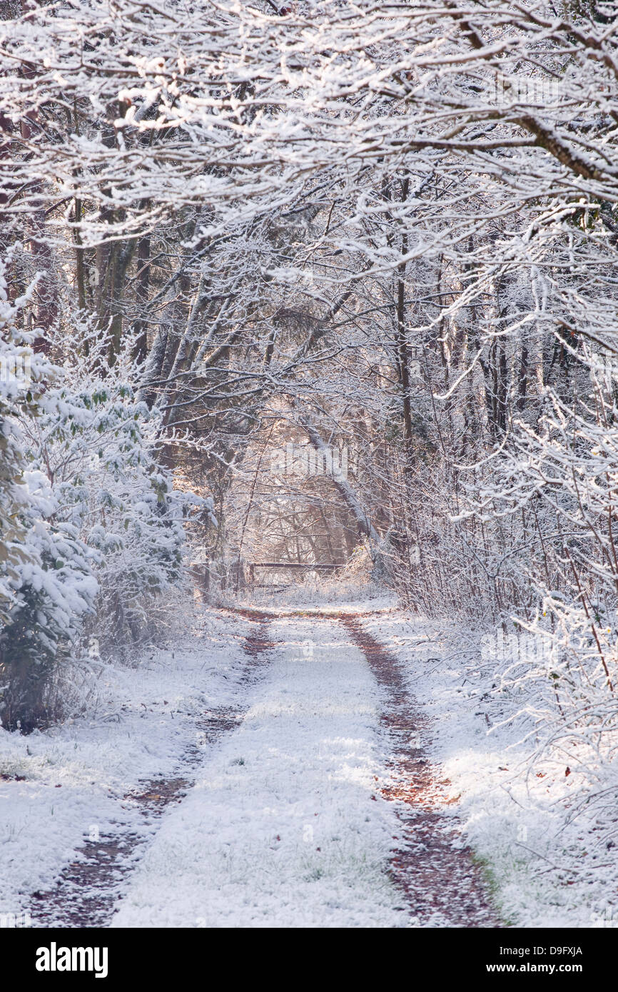 Snow covered trees in the Loire Valley area, Loir-et-Cher, Centre, France - Stock Image