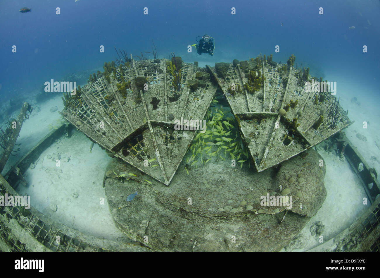 Diver explorers the Thunder dome, Turks and Caicos, West Indies, Caribbean - Stock Image