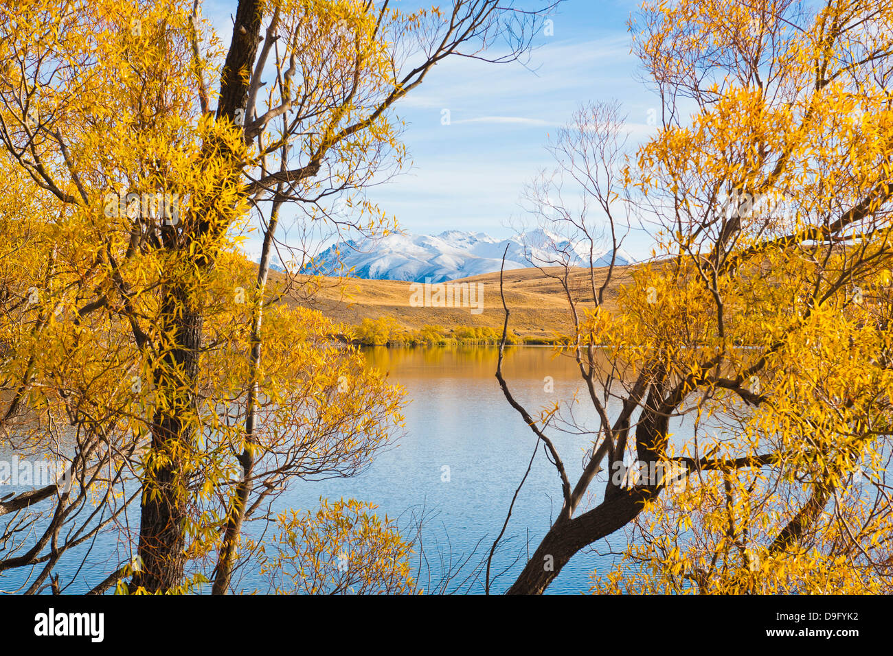 Snow capped mountains and autumn trees, Lake Alexandrina, Canterbury Region, South Island, New Zealand - Stock Image