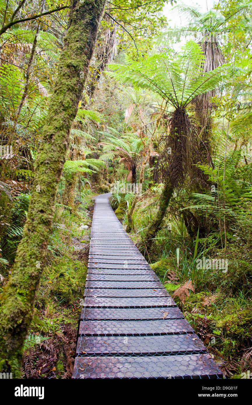 Forest walkway surrounding Lake Matheson, Westland National Park, UNESCO World Heritage Site, South Island, New - Stock Image