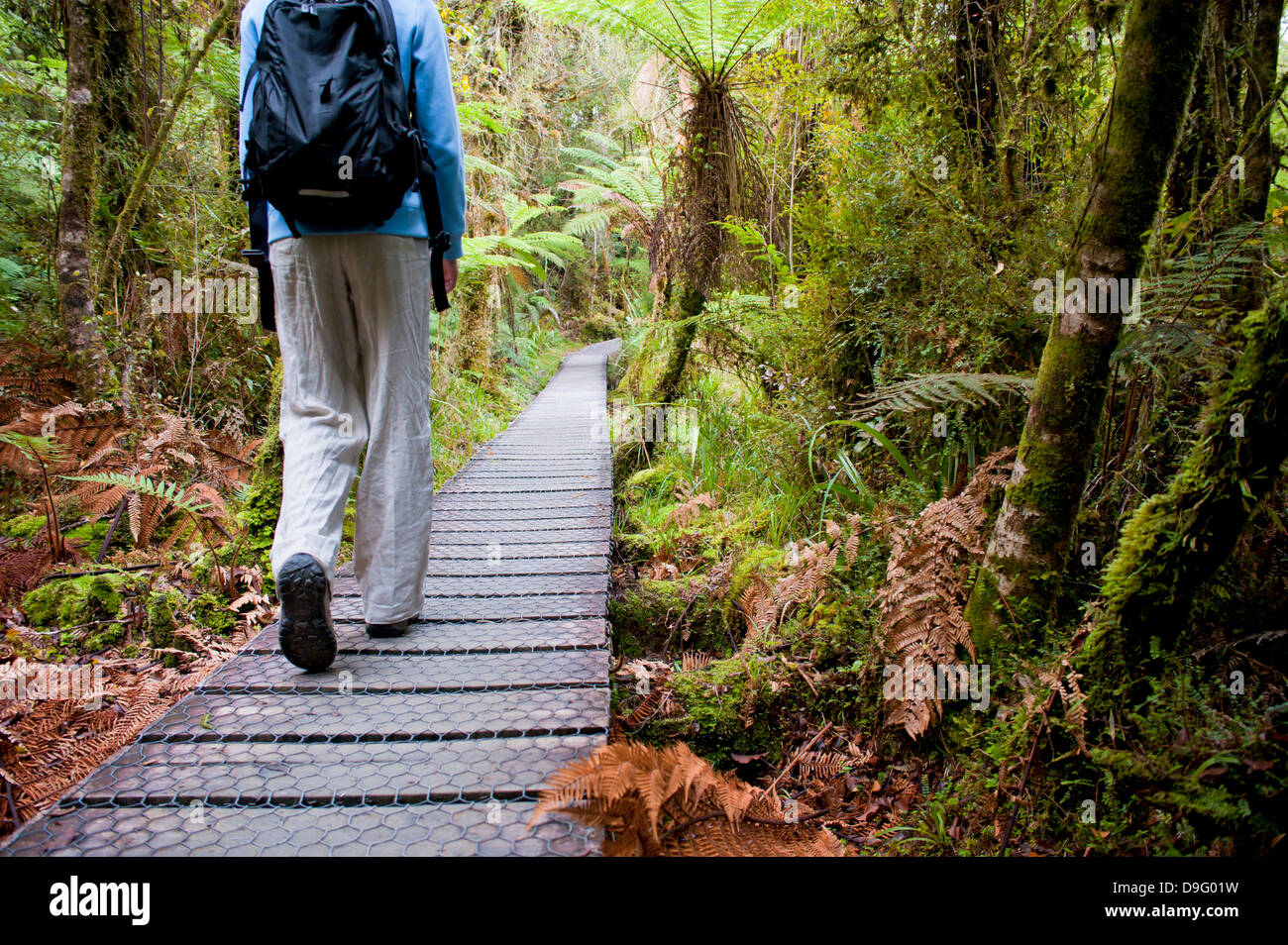 Tourist on the walkway in the forest surrounding Lake Matheson, Westland National Park, UNESCO Site, South Island, - Stock Image