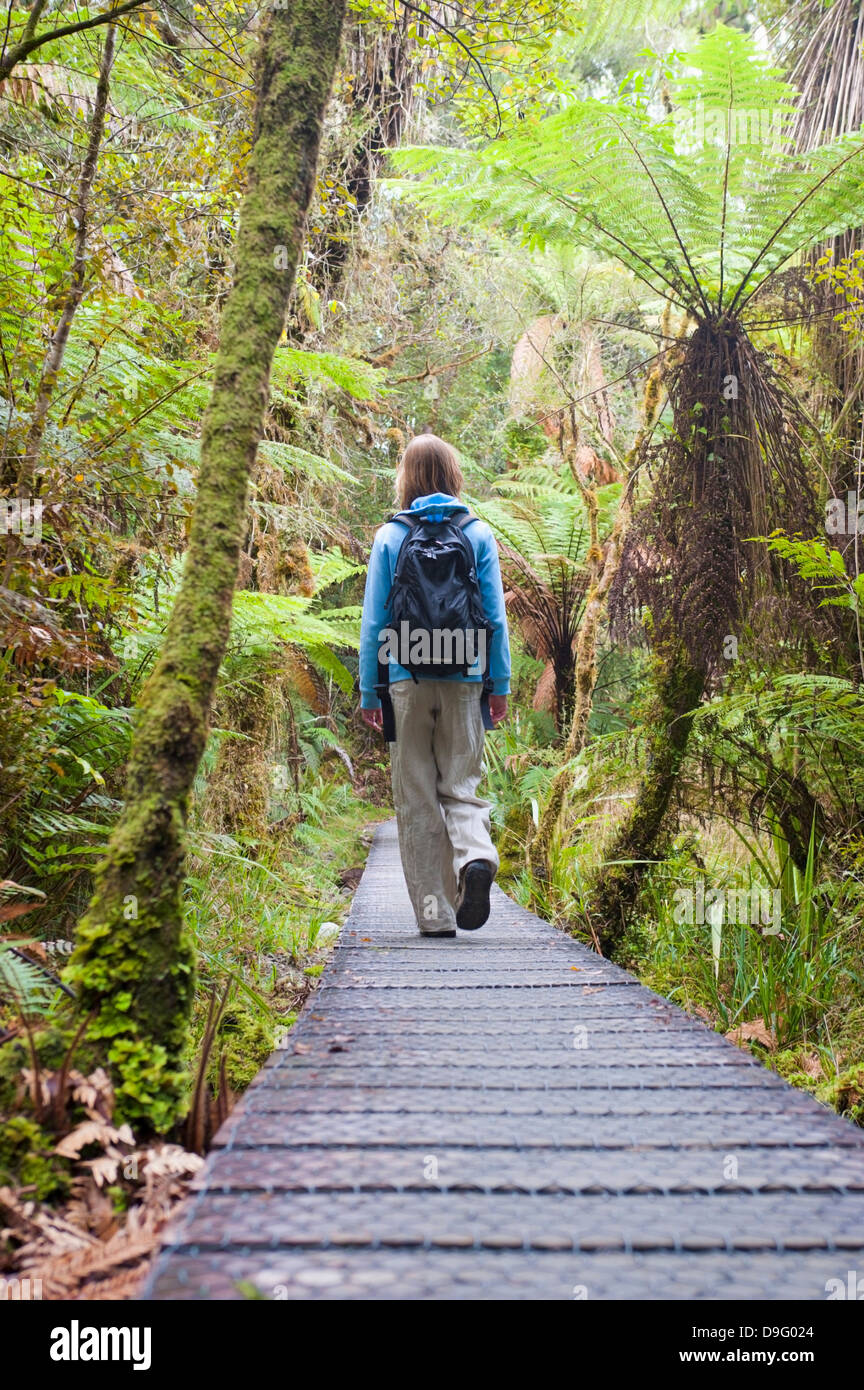 Lake Matheson, tourist on the walkway in the forest, Westland National Park, South Island, New Zealand - Stock Image