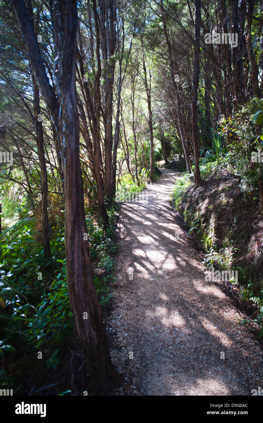 Forest path in the rainforest surrounding Pupu Springs, Golden Bay, Tasman Region, South Island, New Zealand - Stock Image