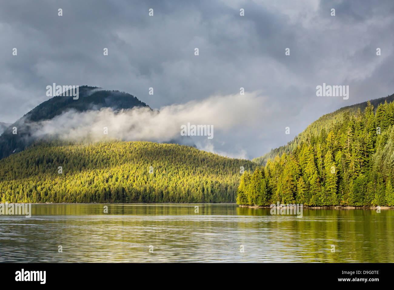 Fog-shrouded forest near Juneau, Southeast Alaska, USA - Stock Image