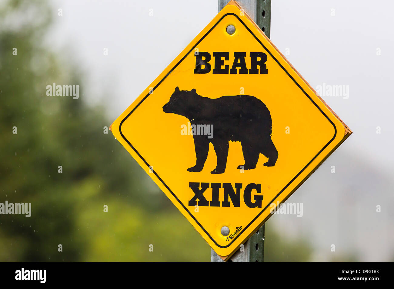 Road sign for bear crossing in Juneau, Southeast Alaska, USA - Stock Image