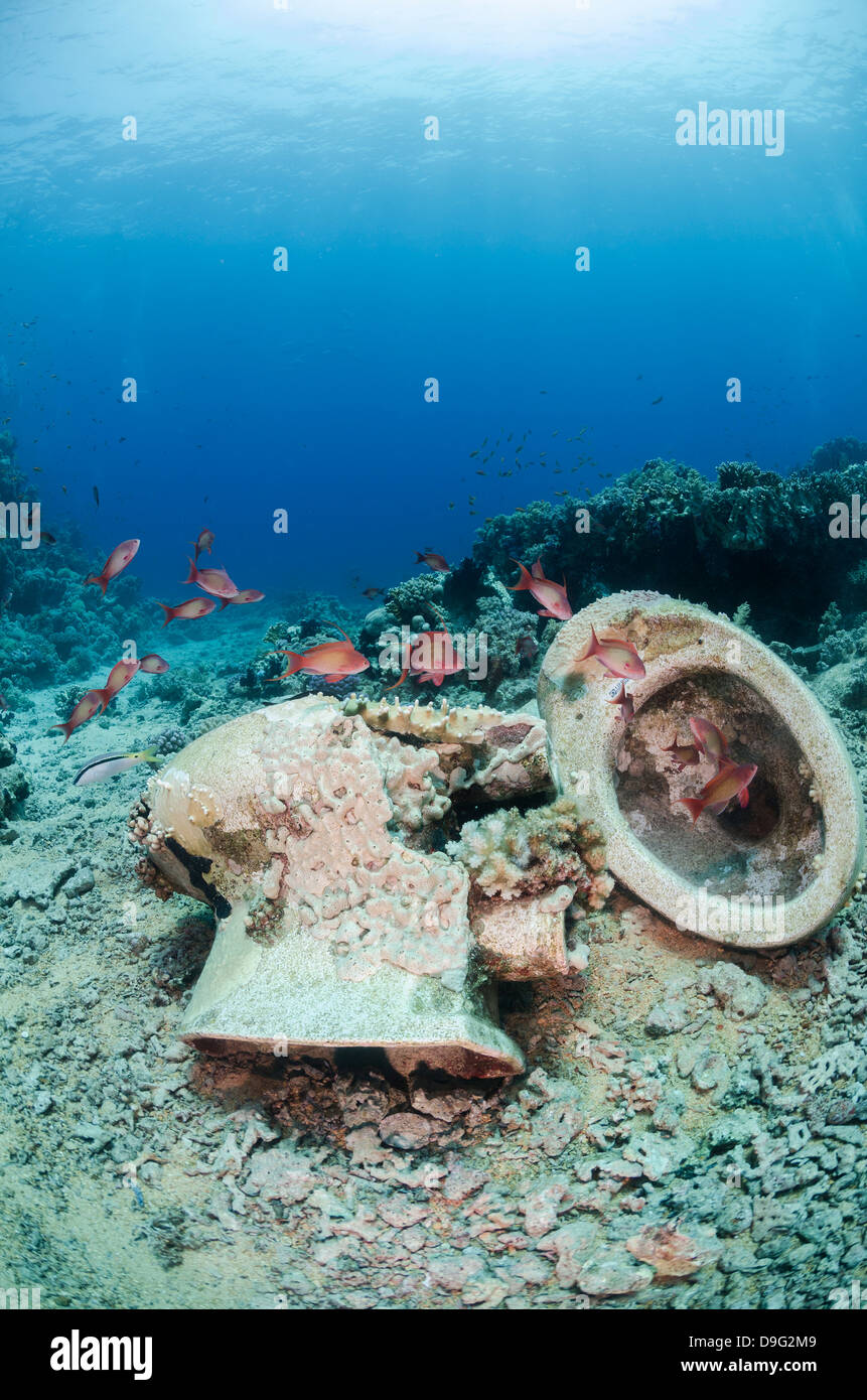 Collection of toilet bowls from shipwreck scattered on seabed, Ras Mohammed National Park, Red Sea, Egypt, Africa - Stock Image