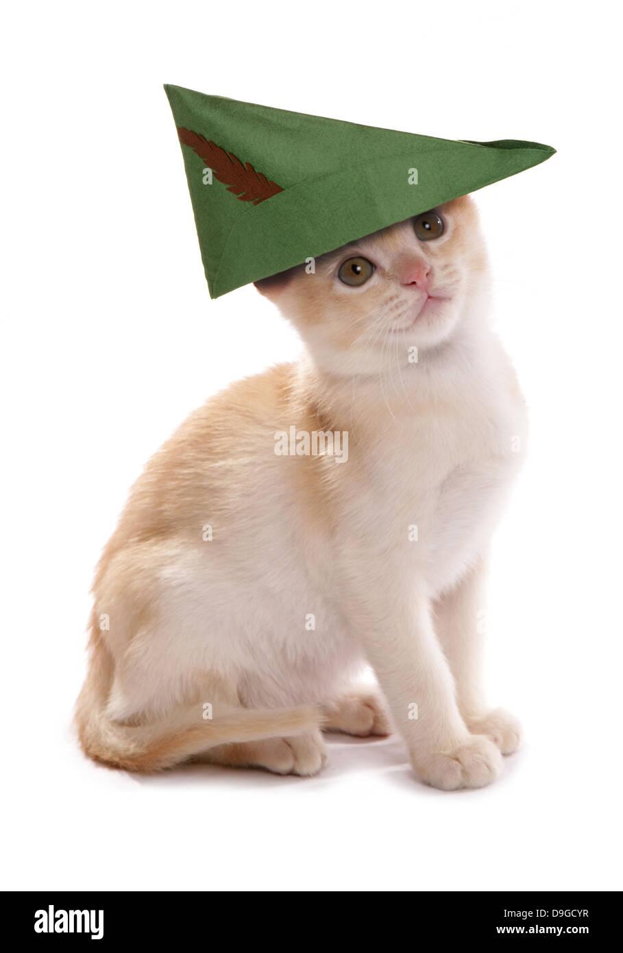 robin hood kitten - Stock Image